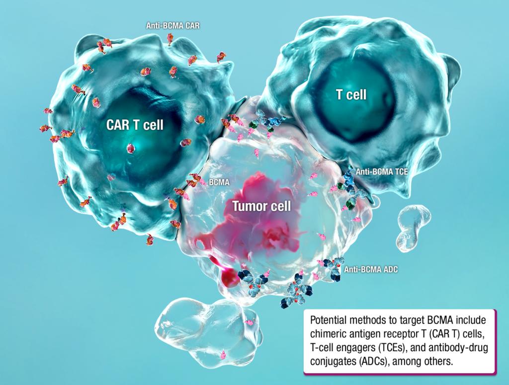 BCMA molecular pathway research