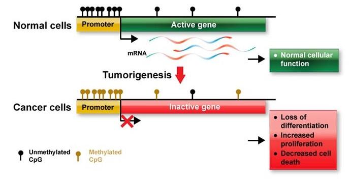 DNA methylation research